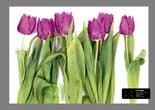 Dutch Wallcoverings AG Design FTS0065