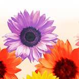 Behang Dutch Wallcoverings Colour & life 46075