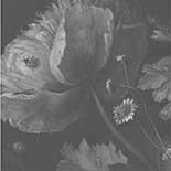 Behang Dutch Wallcoverings KEK Big Black en White Flowers I WP.339