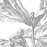 Behang Dutch Wallcoverings KEK Engraved Flowers III WP.329