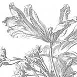 Behang Dutch Wallcoverings KEK Engraved Flowers III WP.333