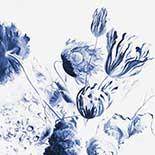 Behang Dutch Wallcoverings KEK Royal Blue Flowers II WP.208