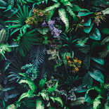 Behang Esta Home Jungle Fever 158900