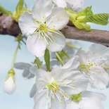 Behang Komar Flowers & Textures Blossom