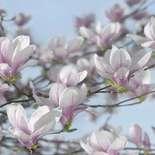 Behang Komar Flowers & Textures Magnolia