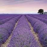 Behang Komar Flowers & Textures Provence V