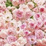 Behang Komar Flowers & Textures Rosa