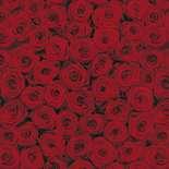 Behang Komar Flowers & Textures Roses