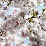 Behang Komar Flowers & Textures Spring