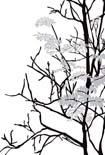 MrPerswall Urban Nature P0318044 behang