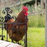 Behang Noordwand Farm Life 3750078