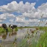 Behang Noordwand Holland 2128-250 Koeien Sloot
