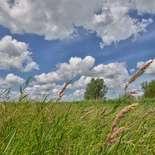 Behang Noordwand Holland 2166-250 Eemland Gras