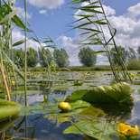 Behang Noordwand Holland 3043-250 Eemland Gele