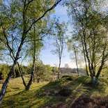 Behang Noordwand Holland 3495-250 Mossel