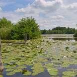 Behang Noordwand Holland 4624-250 Waterlelies