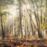 Behang Noordwand Holland 4707-250 Mistig Bos