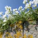 Behang Noordwand Holland 5090-250 Muurbloemen