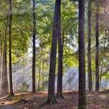 Behang Noordwand Holland 5209-250 Sysselt Mist