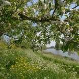 Behang Noordwand Holland 5789-250 Appeldijkje