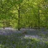 Behang Noordwand Holland 7659-250 Blauwe Lelies