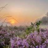 Behang Noordwand Holland 8599-250 Wambuis Mist