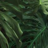 KEK Amsterdam Bold Botanics WP-500 Monstera Behang