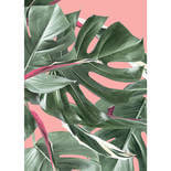 KEK Amsterdam Bold Botanics WP-581 Monstera Behang