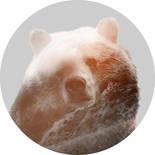 Komar Dots Bearava D1-015 Zelfklevende Behangcirkel