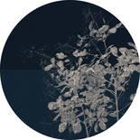 Komar Dots Branch D1-033 Zelfklevende Behangcirkel
